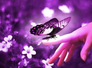 Purple Butterfly on Hand